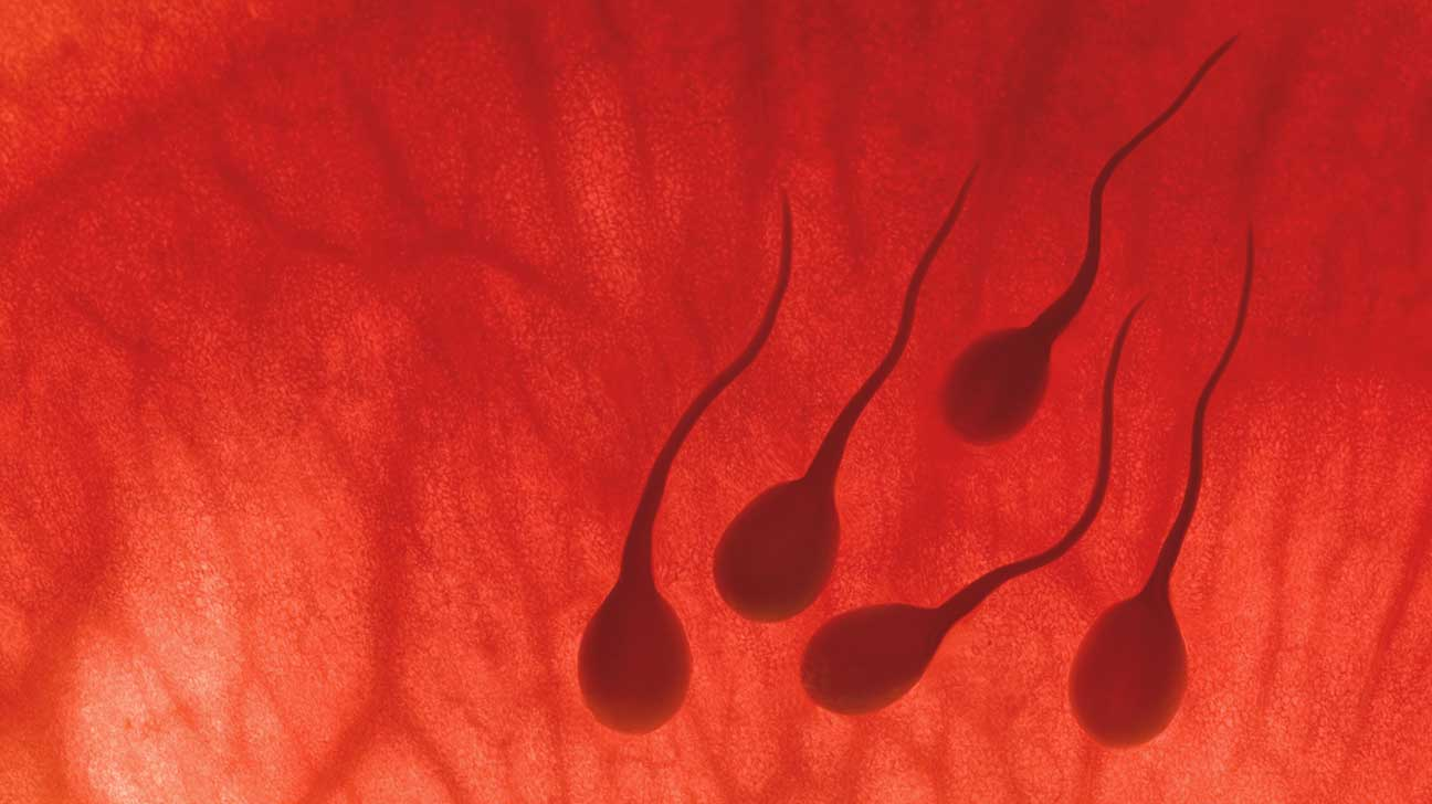 Men, Stress and Fertility