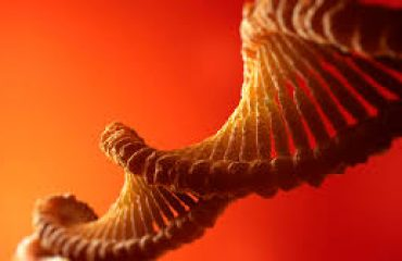 Stanford Geneticists Find Sex the Single Greatest Predictor of Whether Certain Genes Are Expressed