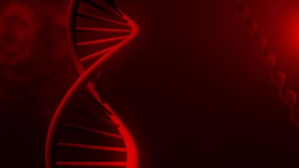 Adoptive transfer of tumor infiltrating lymphocytes for metastatic cervical cancer