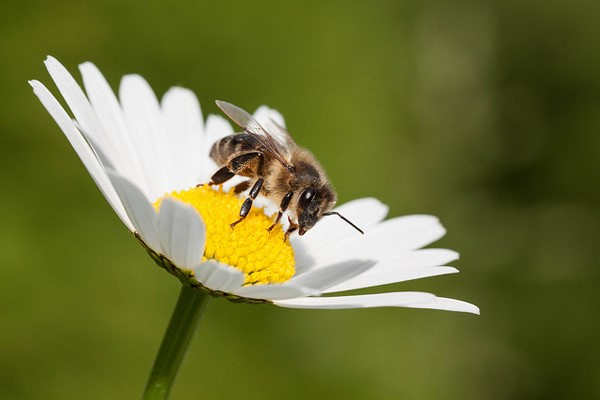 The Autistic Bee!