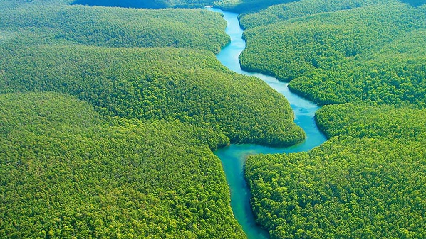 natural view of forest and river in the center